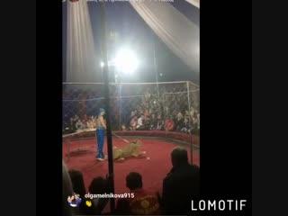 На Кубани в цирке львица напала на 4-летнюю девочку