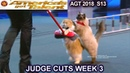 The Savitsky Cats FULL PERFORMANCE New Cats Tricks America's Got Talent 2018 Judge Cuts 3 AGT