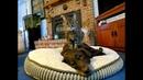 ПОПРОБУЙ НЕ ЗАСМЕЯТЬСЯ - Смешные Приколы и фейлы с Животными до слез, смешные коты 87