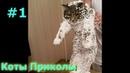 Коты Приколы 1, Смешная подборка про веселых кошек