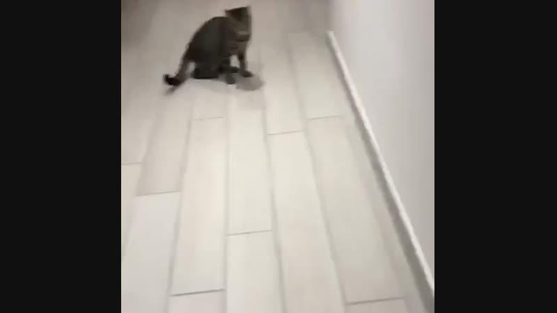 Болельщик Ювентуса тренирует кота по кличке Буффон