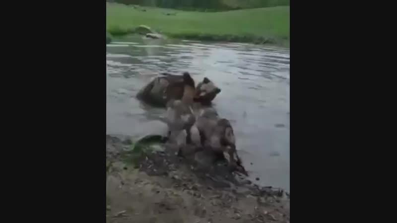 волчица это держава ,медведи это рулящие , ну а волки это те кто знает о происходящем , ну зрителей вы сами слышите , он же зака