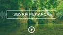 Звуки релакса Шум водопада и пение птиц в лесу