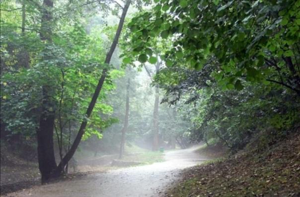 Голосов овраг - таинственное место Москвы, где бесследно пропадают люди Легенды о путешествиях во времени и волшебных лесных существах усиливают природное очарование этого зеленого заповедника