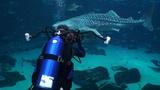 Georgia Aquarium (HD) JONATHAN BIRD'S BLUE WORLD