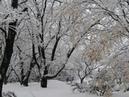 雪が降る  尾崎紀世彦  アダモ作曲   Tombe la neige  Sarbatore Adamo