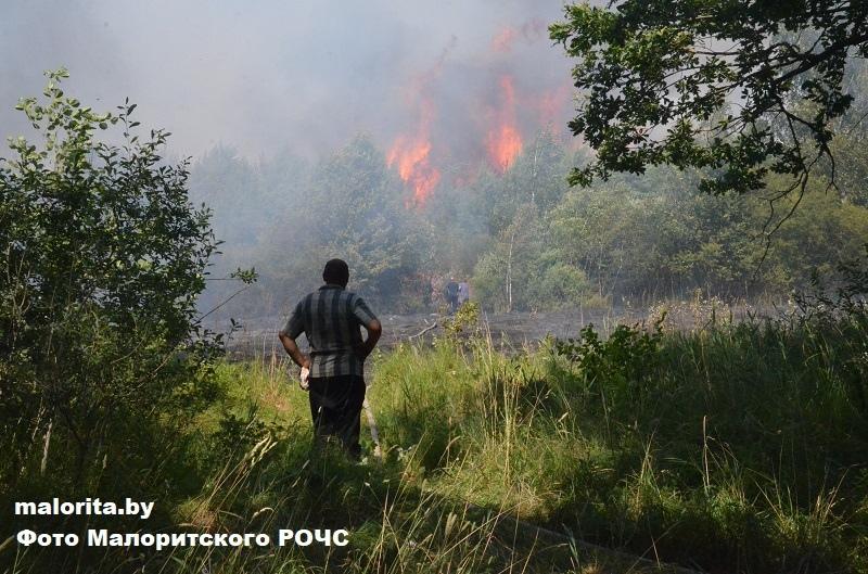 Возле деревни Отчино сгорело 1,5 гектара леса. Виновник установлен, как и по пожару возле деревни Струга