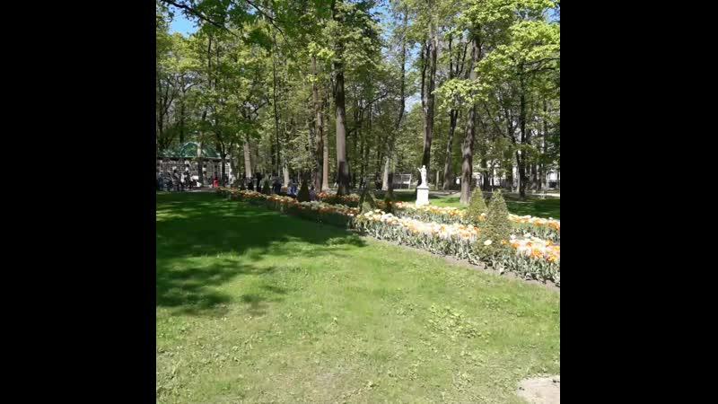 Петергоф фонтан солнышко и цветущие тюльпаны