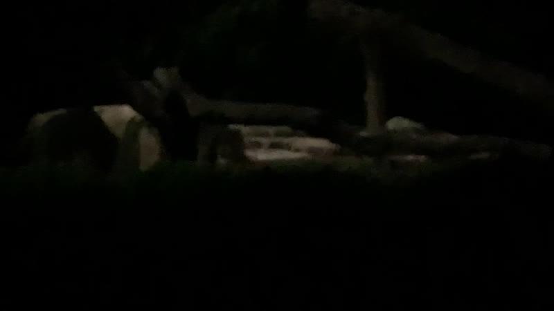Night Safari Mandai Zoo Singapore 🇸🇬