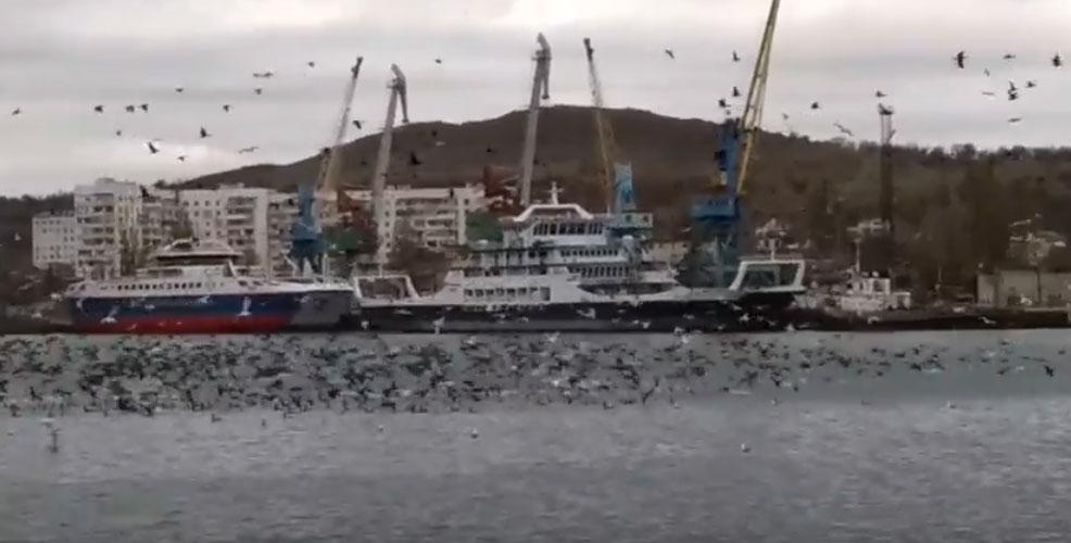 В керченский порт зашел косяк рыбы (видео) Такое редкое явление, как целая акватория рыбного порта хамсы, в Керчи в последний раз наблюдали в 2016 году. Тогда портовики ловили рыбу ведрами. И вот сегодня снова! видео смотрите тут: http://kerch.com.ru/articleview.aspx?id=78179