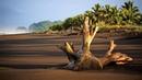 Картинка природа. Пляж, коряга, тропики, черный песок, Коста-Рика, море, океан