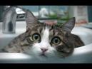 Смешные приколы с кошками лучшие подборки