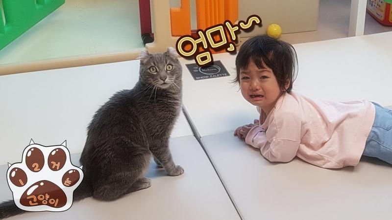 아기 돌보는 고양이 / 육아고양이 / 人間の赤ちゃんの世話をする猫さん/ The cat is t
