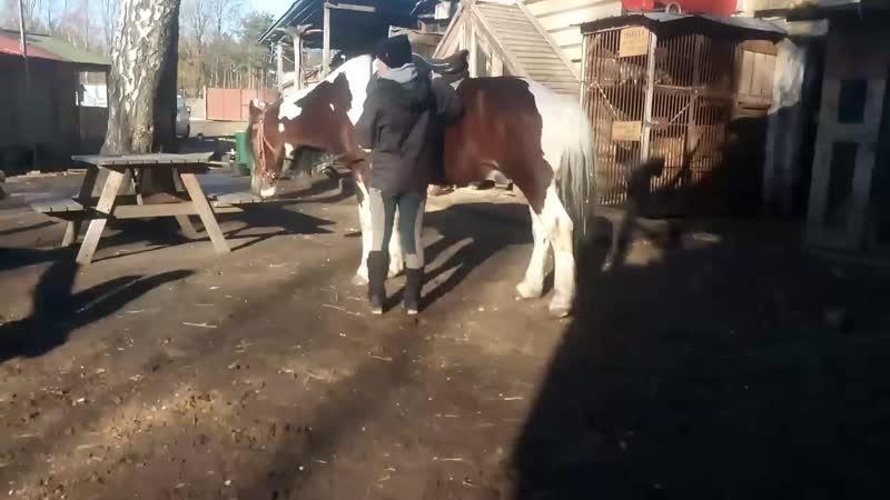 бордер и конь