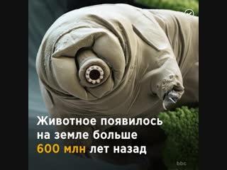 Животное, которое переживёт человека