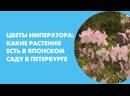 Цветы императора какие растения есть в японском саду в Петербурге