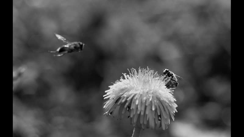 Мор пчёл в Курской области могли вызвать химикаты