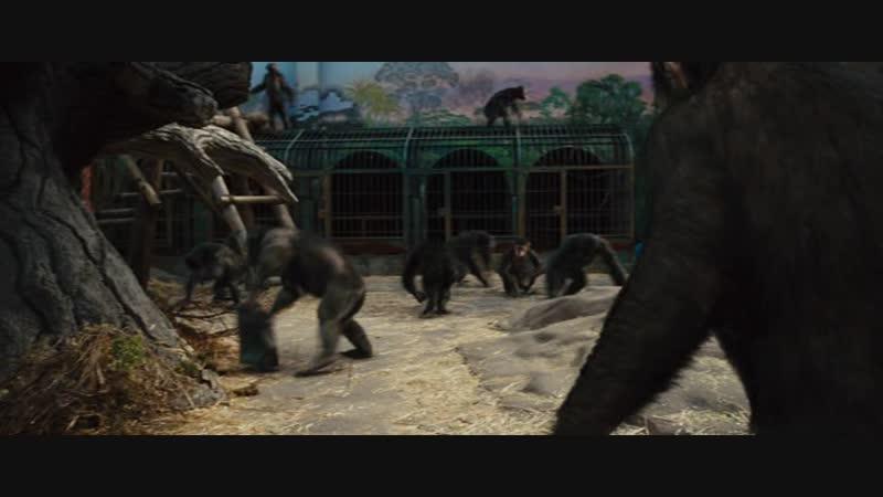 Восстание планеты обезьян (2011)