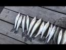 Хорошая была рыбалка 🎣