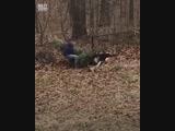 Собаки не дают хозяину выбросить елку