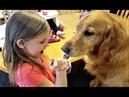 LITTLE GIRL TEACHES GOLDEN RETRIEVER PUPPY DOGS TO SHARE THEIR FOOD!!