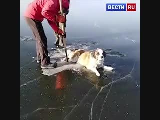 В Чите спасатели вытащили из озера Кенон вмерзшую в лед собаку. Невероятно добрая история!