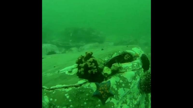Немножко Владивостокского летнего моря в ленту 🦐🦑🦈
