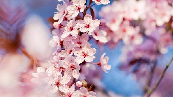 С добрым утром, друзья мои!Пусть оно принесет много тепла ителу, идуше, ивсему живому вэтом мире! Желаю расцветать вместе сэтой прекрасной порой года! Пускай впереди будут только позитив, счастье ивесеннее настроение!