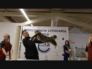 Василий на всемирной выставке в Литве закрывает титул Большого чемпиона Европы!