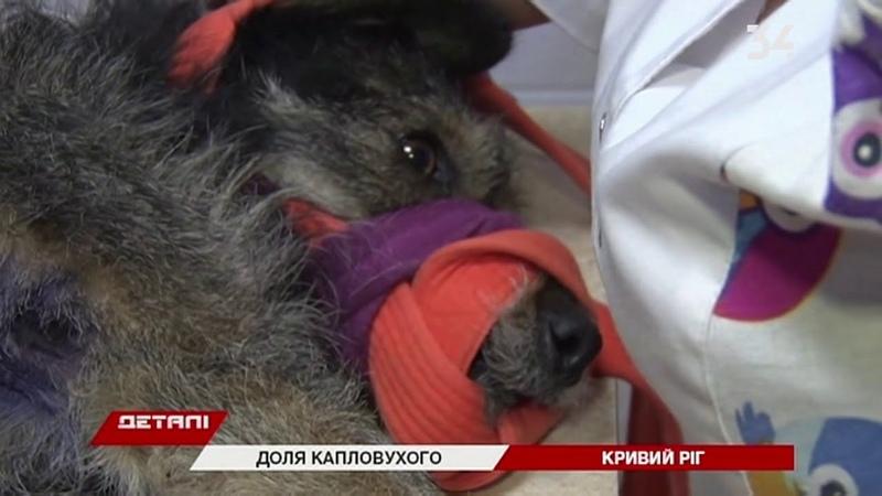 Собаку, которую в Кривом Роге проткнул вилами полицейский, перевезут на лечение в Киев
