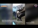 Мегаполис - Пусти козла в огород - Нижневартовск