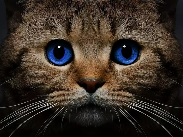Кошка — одно из самых магических животных на земле. Аура ее настолько велика, что охватывает не только конкретного человека, но и его семью, дом и территорию, которую кошка считает своей.