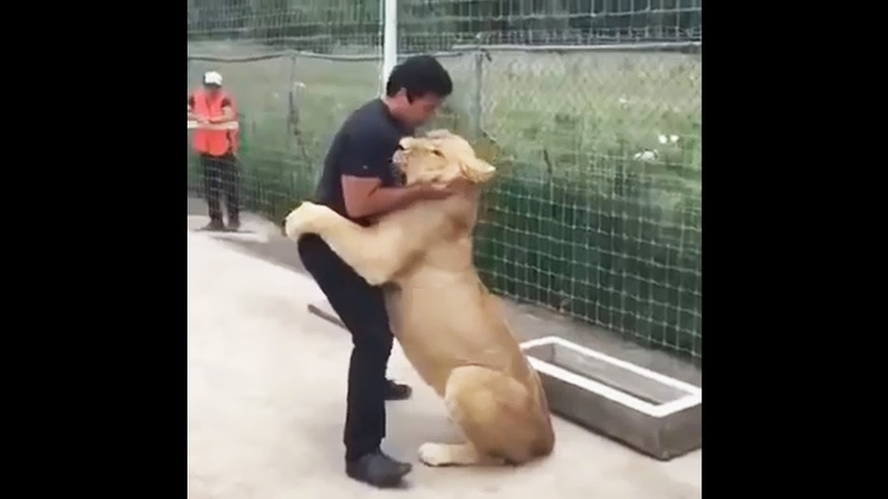 Lion Sees His Adoptive Dad After 7 Years - Truly Heart-warming