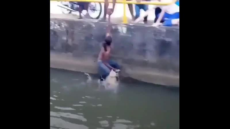 Спасение собачки