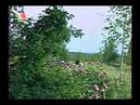 Игорь Бархатков Древо жизни Фильм о династии Бархатковых