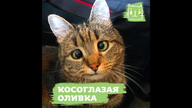 Кошка Оливка с косоглазием
