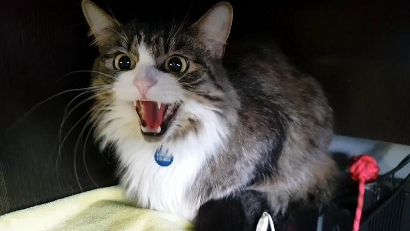 Сюрприз вылупился! И всех котят разобрали! Мурлок делает пхххш!