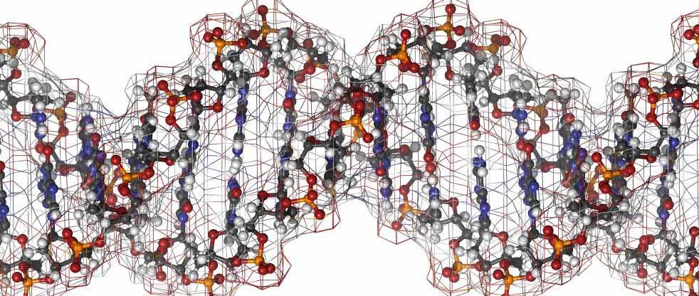 Что такое пептид?