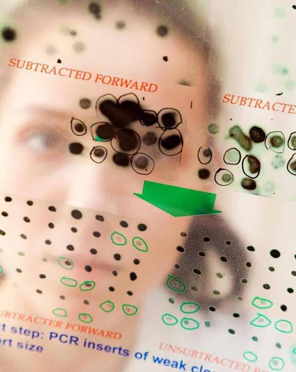 Участки тестирования ДНК не должны содержать загрязнений, которые могут испортить результаты теста.