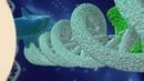 SCA® Biorepair Technology – запатентованная технология Cantabria Labs (Испания)