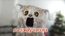 Приколы с котами – ЗАСМЕЯЛСЯ ПРОИГРАЛ 2018 – ТЕСТ НА ПСИХИКУ - DOMI SHOW