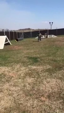 Jumpy doggo