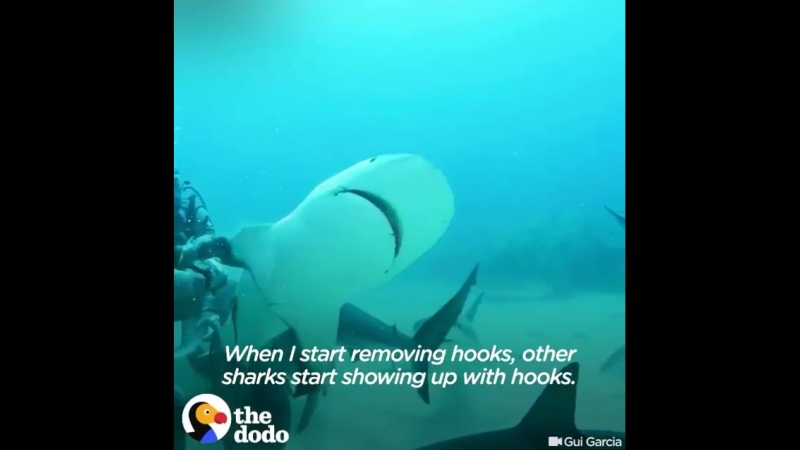 A diver who made it her life's work to remove hooks caught in sharks' mouths.