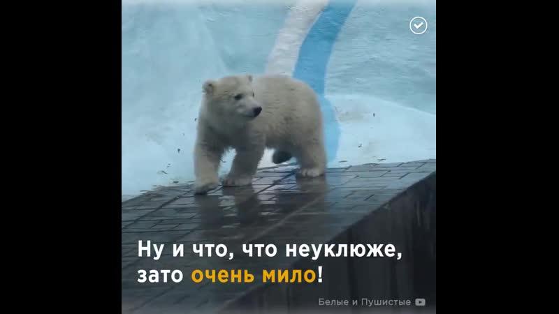 На этого медвежонка невозможно без умиления!.mp4