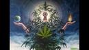 Запрещенный фильм о марихуане Такого Вы не узнаете нигде Высшее Растение На Высоте Культуры