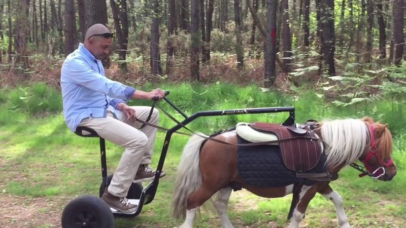 Attelage Speed-Shet pour poney Shetland