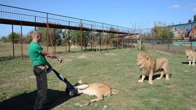 СМОТРЕТЬ ВСЕМ , кто собирается в Саванну ко львам Лев Малыш наказывает Лейлу !