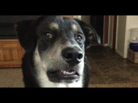 На этих 25 ти фотографиях собаки совсем как люди Посмотри и ты обхохочешься