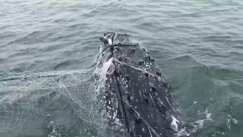Resgate de baleia no litoral do Paraná