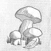 Семинар о съедобных грибах и грибной кулинарии